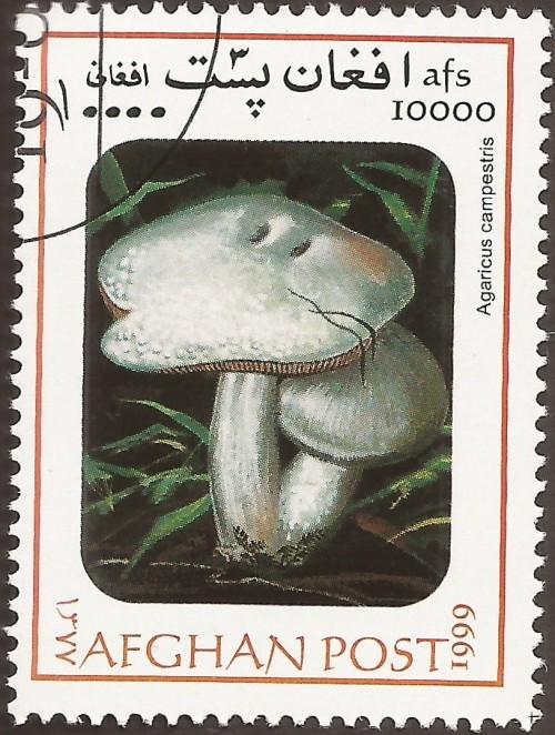 """Agaricus campestris; Mushrooms """"not authorized"""""""