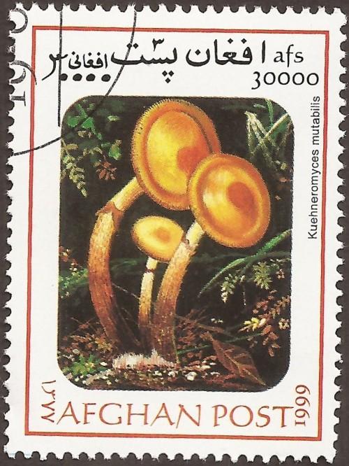 """Kuehneromyces mutabilis; Mushrooms """"not authorized"""""""