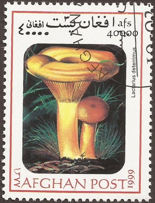 """Lactarius deterrimus; Mushrooms """"not authorized"""""""