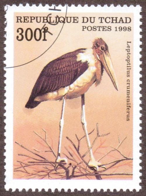 Birds; Leptoptilus crumeniferus, {Marabou stork}