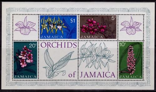 Jamaica-Orchids.jpg
