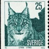 Eurasian-lynx---Lynx-lynx
