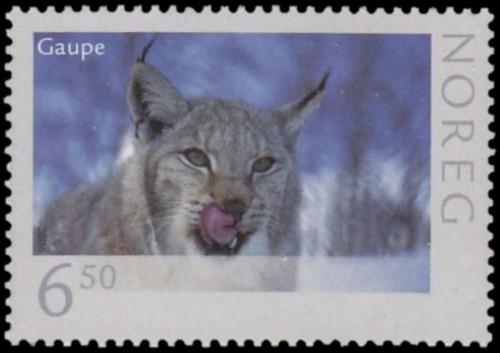 Lynx-Lynx-lynx-1.jpg
