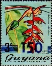 guyana1296.jpg