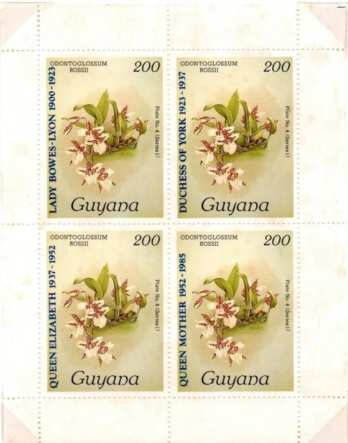 guyana1539.jpg