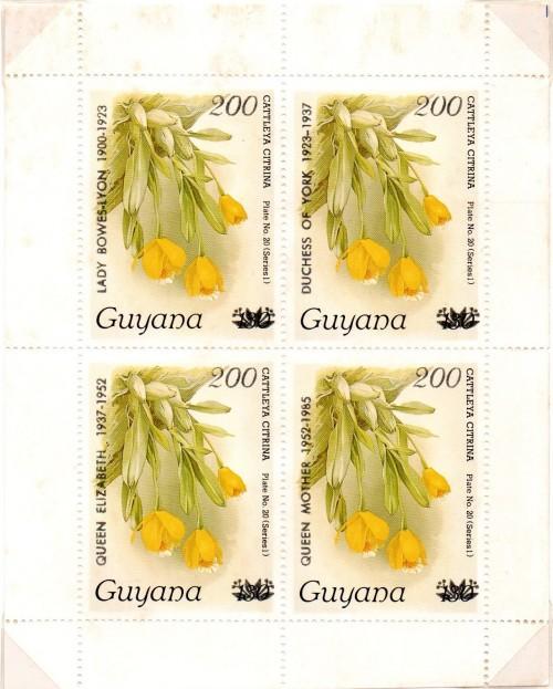 guyana1570.jpg
