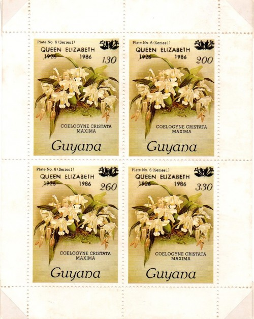 guyana1685.jpg