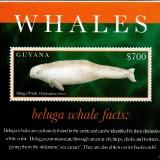 guyanawhales1