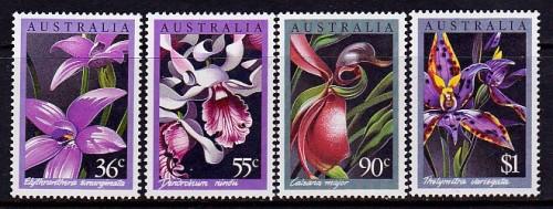 Aus-Orchids.jpg