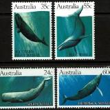 Aus-Whales