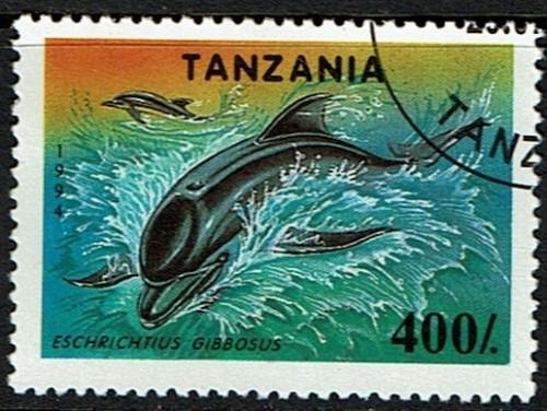 Tanzania-Dolphin.jpg