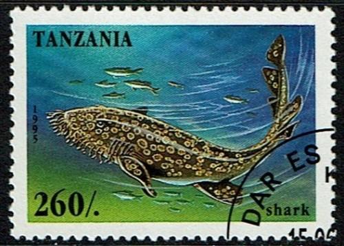 Tanzania-Shark.jpg