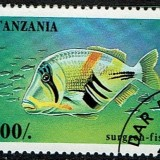 Tanzania-Surgeon-Fish