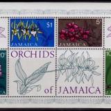Jamaica-Orchids