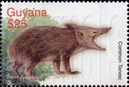 guyana6423