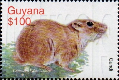 guyana6425