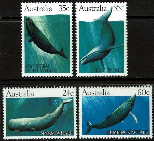 Aus-Whales.jpg