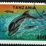 Tanzania-Dolphin