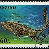 Tanzania-Shark