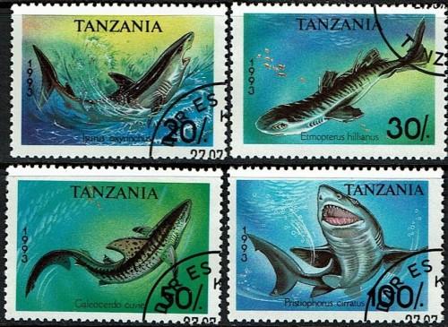 Tanzania-Sharks.jpg
