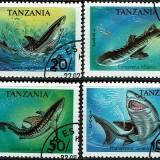 Tanzania-Sharks
