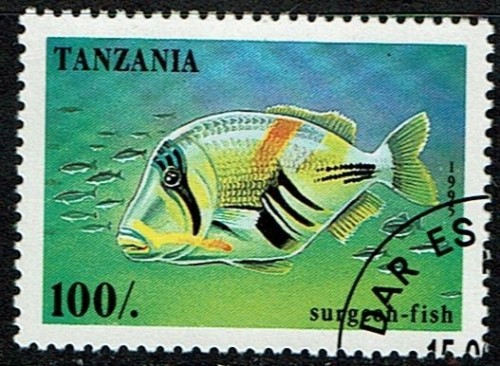 Tanzania-Surgeon-Fish.jpg