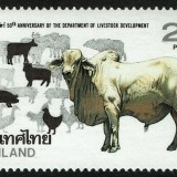 Thailand-Scott-1468-1992-Livestock-Development