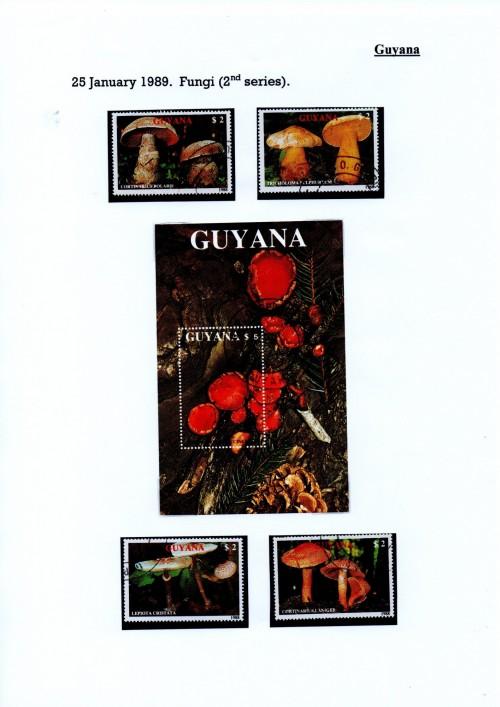 Guyana-B17.jpg
