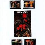 Guyana-B17
