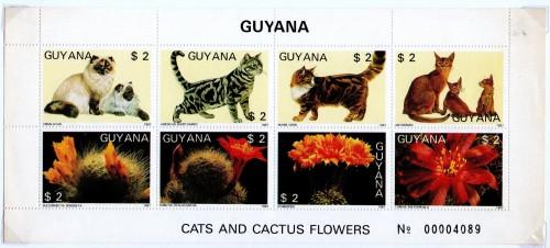 Guyana-B4.jpg