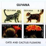Guyana-B4