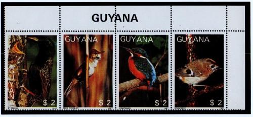 Guyana-B5.jpg