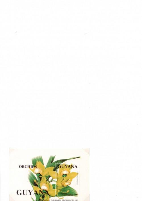 Guyana-B48.jpg
