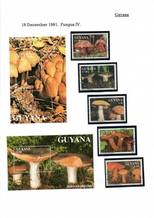 Guyana-B50.jpg