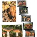 Guyana-B50