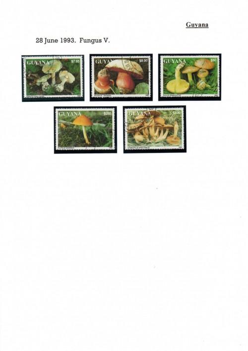 Guyana-B56.jpg