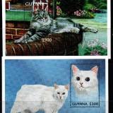 guyana-trade-6