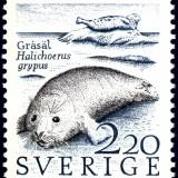 Grey-Seal-Halichoerus-grypus
