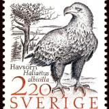 White-tailed-Eagle-Haliaeetus-albicilla