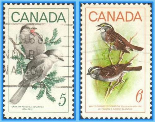 canada-birds1.jpg