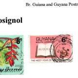 guyana-rosignol