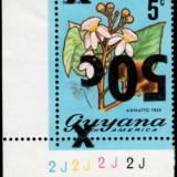 guyana-errors-5
