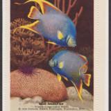 1949-Fish