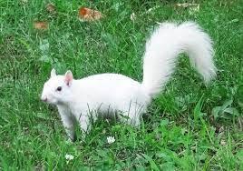 Squirrel-from-Olney.jpg