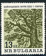 bulgaria-oldtree.jpg